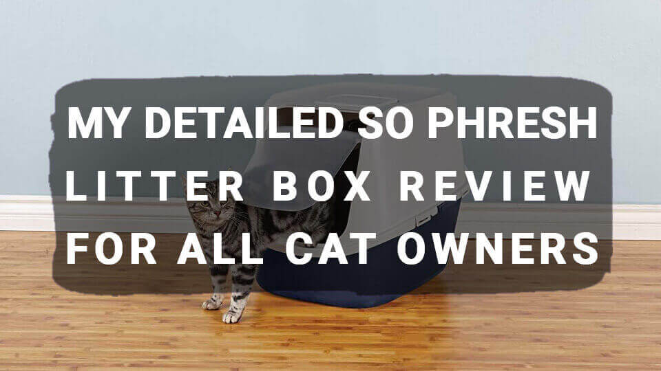 You are currently viewing My Detailed So Phresh Litter Box Review For All Cat Owners