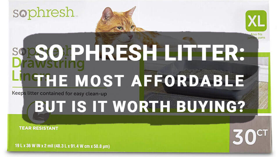 So Phresh Cat Litter: Your Guide To Choosing The Best