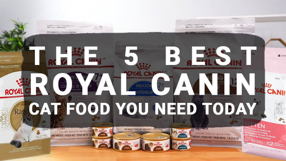 You are currently viewing The 5 Best Royal Canin Cat Food You Need Today