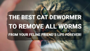 Read more about the article The Best Cat Dewormer to Remove All Worms from Your Feline Friend's Life Forever!