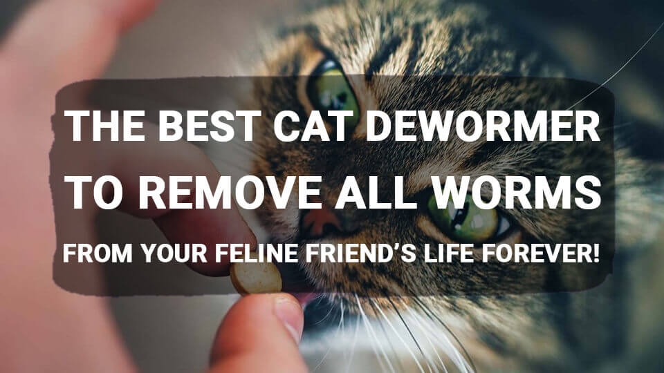 You are currently viewing The Best Cat Dewormer to Remove All Worms from Your Feline Friend's Life Forever!