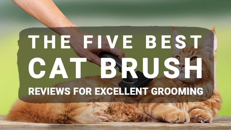 You are currently viewing The Five Best Cat Brush Reviews For Excellent Grooming