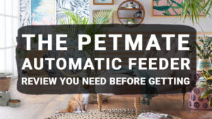 The Petmate Automatic Feeder Review You Need Before Getting
