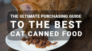 The Ultimate Purchasing Guide to the Best Cat Canned Food