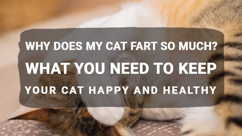 You are currently viewing Why Does My Cat Fart So Much? What You Need to Keep Your Cat Happy and Healthy