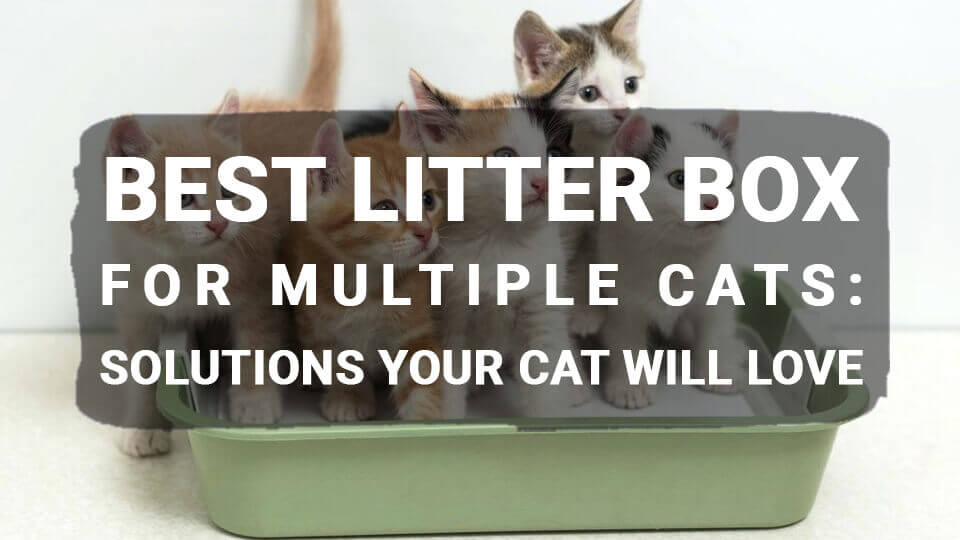 You are currently viewing Litter Box for Multiple Cats: Solutions Your Cat will Love