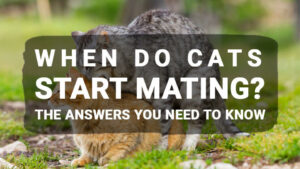 Read more about the article When Do Cats Start Mating? The Answers You Need To Know