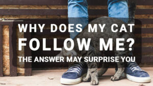 Read more about the article Why Does My Cat Follow Me? The Answer May Surprise You